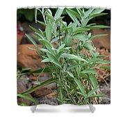 Salvia Officinalis Sage Shower Curtain