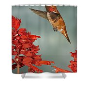 Salvia Treat Shower Curtain