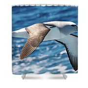 Salvins Albatross Shower Curtain