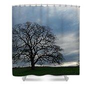 Same Tree Many Skies 10 Shower Curtain