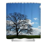 Same Tree Many Skies 11 Shower Curtain