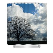 Same Tree Many Skies 13 Shower Curtain