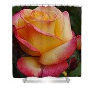 San Francisco Rose Garden Rose Shower Curtain