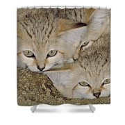 Sand Cat Felis Margarita Shower Curtain