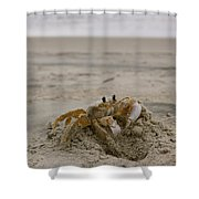 Sand Crab Shower Curtain by Nelson Watkins