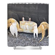 Sand Crab Up Against The Sidewall Shower Curtain