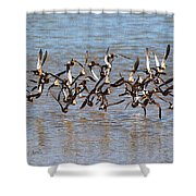 Sand Pipers Arrive At The Grp Shower Curtain