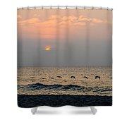 Sand Sea Sun Shower Curtain