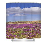 Sand Verbena On The Imperial Sand Dunes Shower Curtain