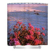 Sand Verbenas At Sunset White Sands National Monument Shower Curtain