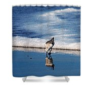 Sanderling 003 Shower Curtain
