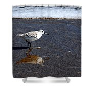 Sanderling 004 Shower Curtain