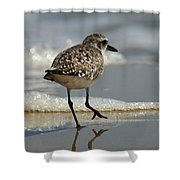 Sanderling Gulf Of Mexico Shower Curtain