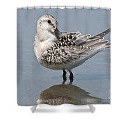 Sanderling Pictures 32 Shower Curtain