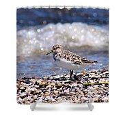 Sanderling Wave Watching Shower Curtain