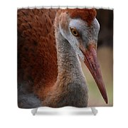 Sandhill Baby Face Shower Curtain