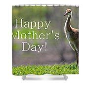 Sandhill Chick Mother's Day Card Shower Curtain