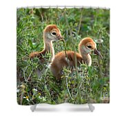 Sandhill Chicks Shower Curtain