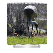 Sandhill Chicks Under Foot Shower Curtain