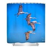Sandhill Crane 10 Shower Curtain
