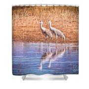 Sandhill Crane 11 Shower Curtain