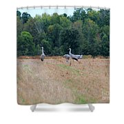Sandhill Crane 2 Shower Curtain