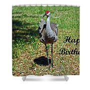 Sandhill Crane Birthday Shower Curtain