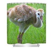 Sandhill Crane Chick I Shower Curtain