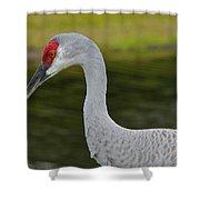 Sandhill Crane Close Up Shower Curtain
