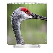 Sandhill Crane Closeup Shower Curtain