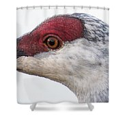 Sandhill Crane Eye Shower Curtain