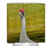 Sandhill Crane Face-on Shower Curtain