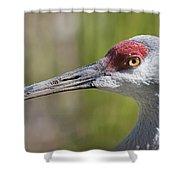 Sandhill Crane Grus Canadensis Shower Curtain