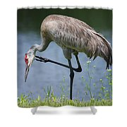 Sandhill Crane Shower Curtain