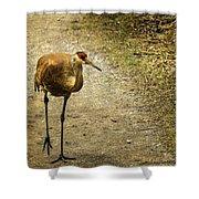 Sandhill Crane On The Road Shower Curtain