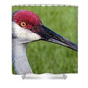 Sandhill Crane Portrait Shower Curtain