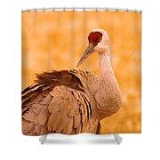 Sandhill Crane Posing Shower Curtain