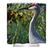 Sandhill Crane Profile Shower Curtain