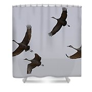 Sandhill Crane Quartet Shower Curtain