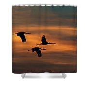 Sandhill Crane Sunset Shower Curtain