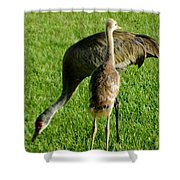 Sandhill Crane With Chick II Shower Curtain
