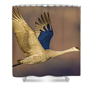 Sandhill Crane Young Adult Shower Curtain