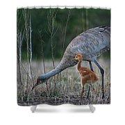 Sandhill Cranes 2 Shower Curtain