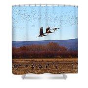 Sandhill Cranes 6 Shower Curtain