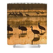 Sandhill Cranes Bosque Del Apache Nwr Shower Curtain