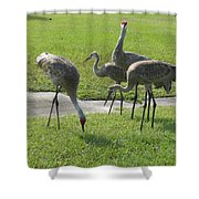 Sandhill Cranes Family Shower Curtain by Zina Stromberg