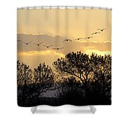 Sandhill Cranes Flying At Sunset Shower Curtain