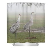 Sandhill Cranes In A Foggy Morning Shower Curtain