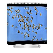 Sandhill Cranes In Mass Shower Curtain