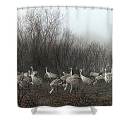 Sandhill Cranes In The Fog Shower Curtain